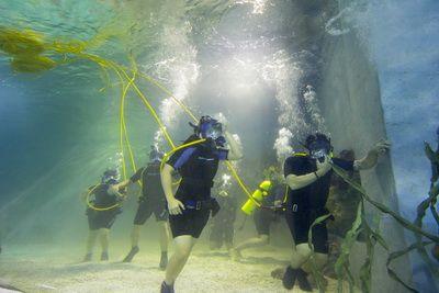 Aquarium Ocean Walk