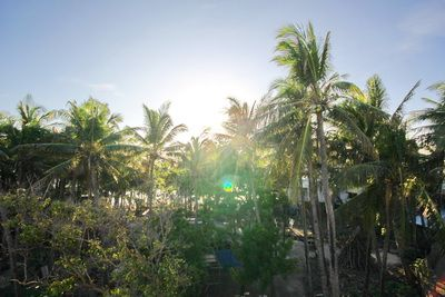 Blue Dawn Boracay