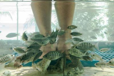 Bamboo Massage and Fish Spa